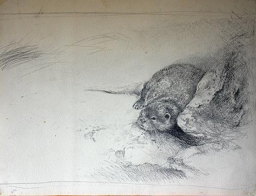 CLICK IMAGE FOR SCAN DETAIL